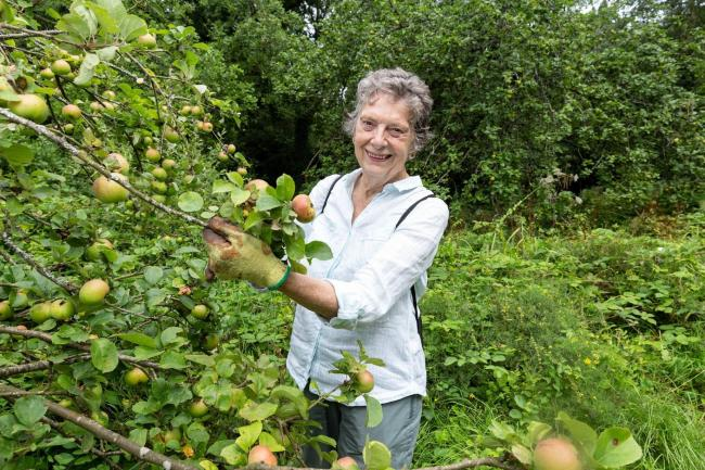 Volunteer Hilary Coombes in Lady Gilbert's Orchard in Harrow