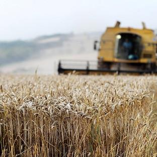 Wheat yields fell this year to levels last seen in the late 1980s, the National Farmer's Union said