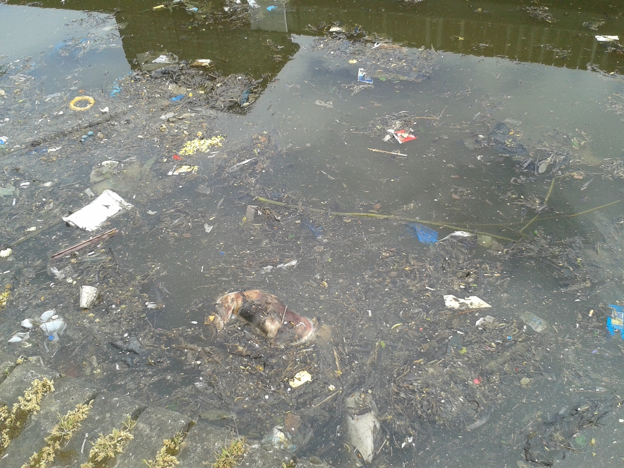 Ugly: rubbish clogging the canal, as witnessed by Gini Moore