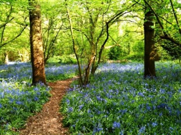 Perivale Wood: beauty spot threatened by HS2
