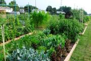 How does your garden grow? The idea is to create a landscaped allotment area