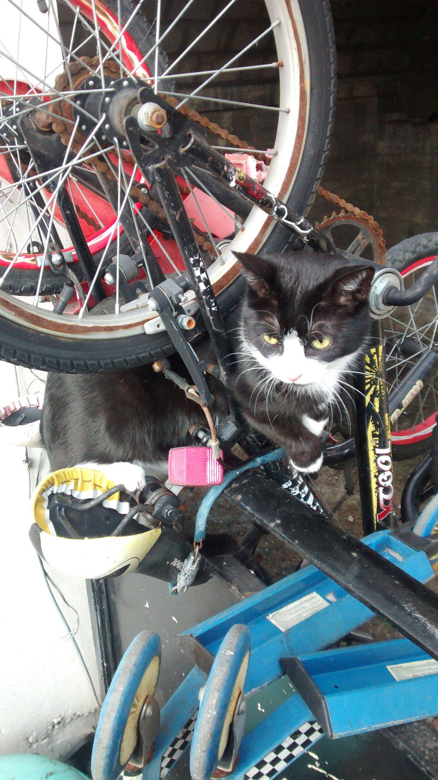 Cat-astrophe averted after Ealing feline rescued from mountain bike