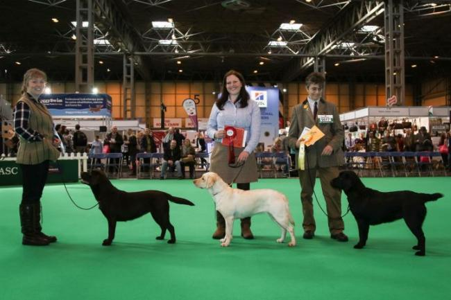 Paige's work has seen her compete at Crufts, the world's largest dog show, since she was 13